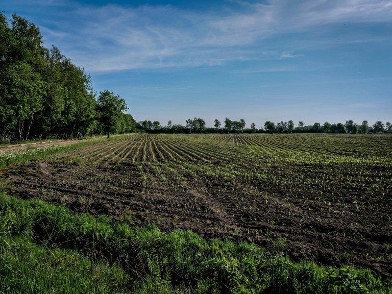 kempen-belgium-campine