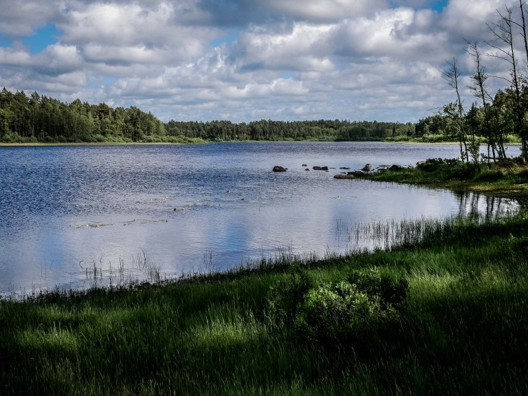 Sweden-lake-forest